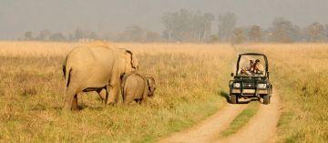 Delhi To Jim Corbett National Park Package 2 Nights 3 Days
