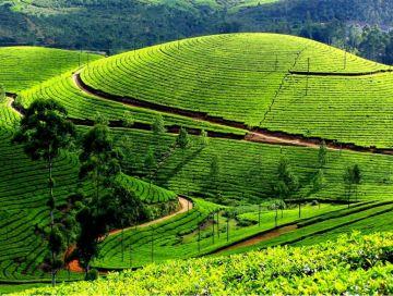 Hills & Backwaters Kerala Package 3 Nights / 4 Days