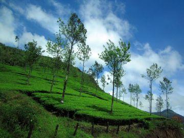 Glimpses of Kerala  7 Night / 8 Days