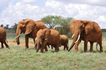 8 Days Kenya Scenic Safari