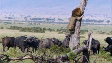 Kenya  and Tanzania Safari Adventure