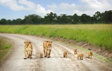 OPTION : 4 KENYA WILDLIFE SAFARI