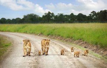 OPTION : 5 KENYA WILDLIFE SAFARI