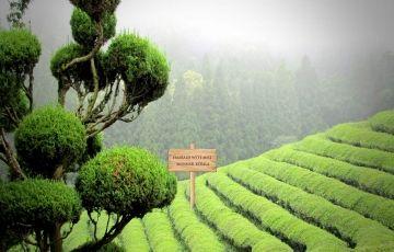 Enjoy Nature At Alleppey, Kochi & Munnar