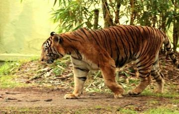 Delightful Coorg with Kabini 5 Days / 4 Nights