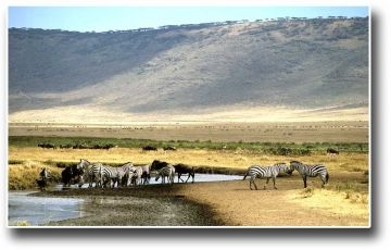 Best Of Tanzania - Reduced