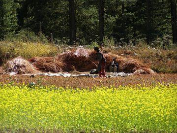 Shimla Kullu Manali trip by Ac Volvo