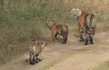 National Park Panna 01 Night & 02 Days
