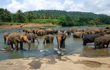 Sri Lanka Tour Package For 6 Days
