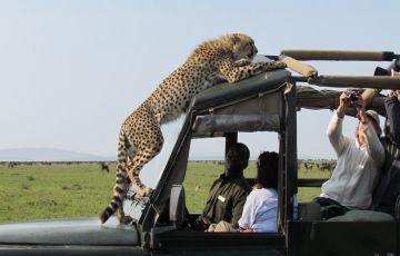 7 Days Adventure Safaris Tour