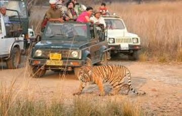 Mussoorie Kanatal Rajaji Tiger Reserve Tour Package