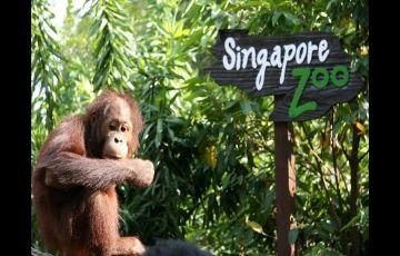 6 Days Singapore  and Malaysia   Honeymoon Tour ex Bangalore