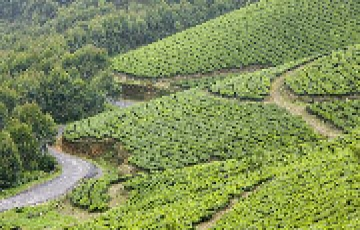 Honeymoon Tour for Munnar and Alleppey