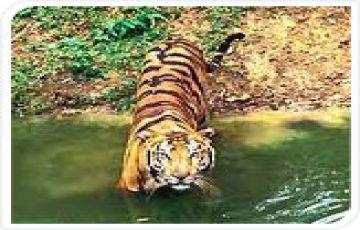 Kanha National Park Tour ( Madhya Pradesh)