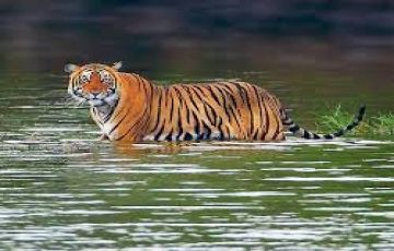 Delhi, Agra with  Rajasthan Wildlife Tour Package