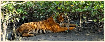 Best Tour Package in Sundarban