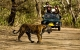 Corbett 2 Night Group Tour Package