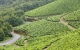 Enjoy Nature@ Munnar, Thekkady & Alleppey