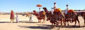 Bikaner Camel Festival Rajasthan