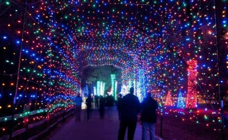 Wild Lights At Denver Zoo 2019 In United States Of America