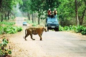Tadoba National Park - Bringing you a taste of forest & much more