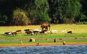 Best Wildlife places in India