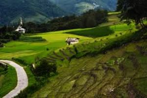 Ziro Tour Packages