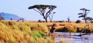 Serengeti Tour Packages