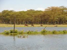Naivasha Tour Packages
