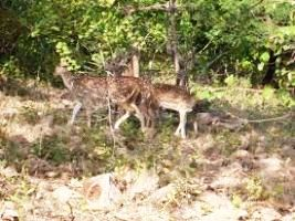 Places to visit in Sasan Gir in India