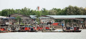 Kuala Selangor Tour Packages