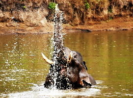 Nagarhole Tour Packages