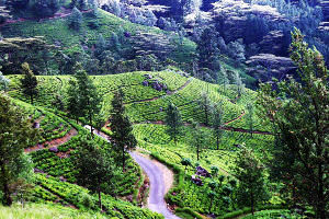 Matale Tour Packages