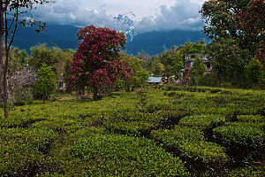 Places to visit in Palampur in India