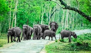 Bandipur Tour Packages