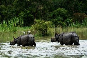 Places to visit in Assam in India