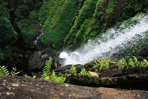 Agumbe Tour Packages