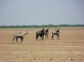 Places to visit in Kutch in India