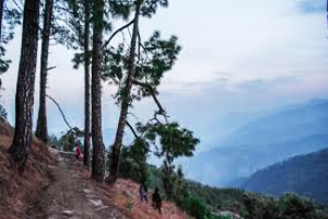 Binsar Tour Packages