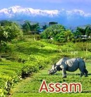 Assam Tour Packages