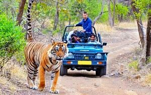 jim corbett Tour Packages