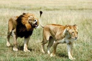 Your Wildlife Tour begins at Gir National Park, Gujarat