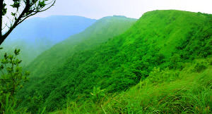 Vagamon Tour Packages