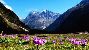 Yumthang Tour Packages