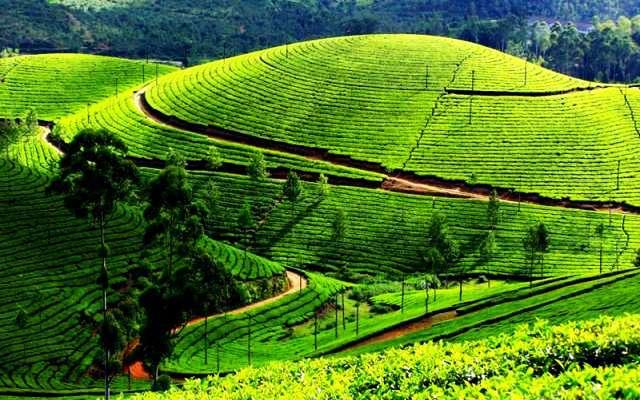 Darjeeling 2019, #1 places to visit in west bengal, top