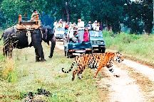 Ranthambhore Tour - Tiger Safari