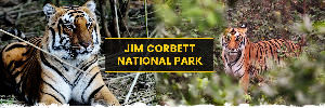 A Step Closer To Wildlife, Visit Jim Corbett