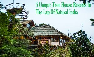 5 Unique Tree House Resorts In The Lap Of Natural India