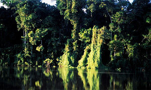 Forests: The Only Lifeline For Humanity