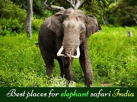 Best places for elephant safari India